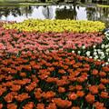 写真: 水辺のお花畑