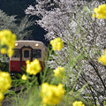 春の日「小湊鉄道」