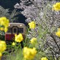 Photos: 春の日「小湊鉄道」