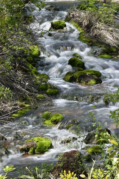 Photos: 苔の渓流