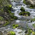 写真: 苔の渓流