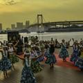 写真: お台場でフラダンス