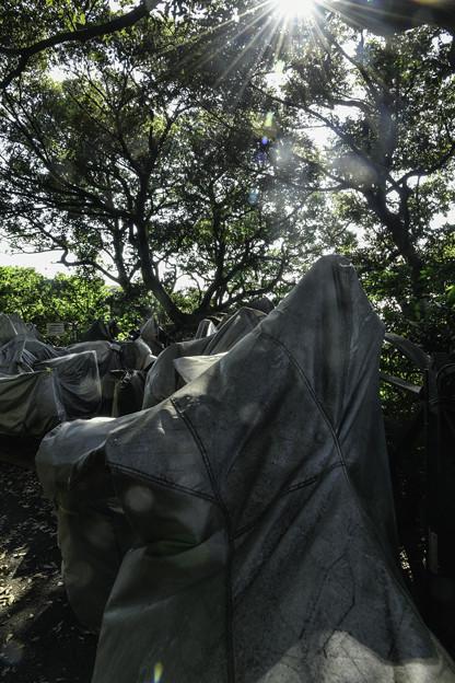 江の島にて (2)