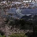 写真: 東名を望む