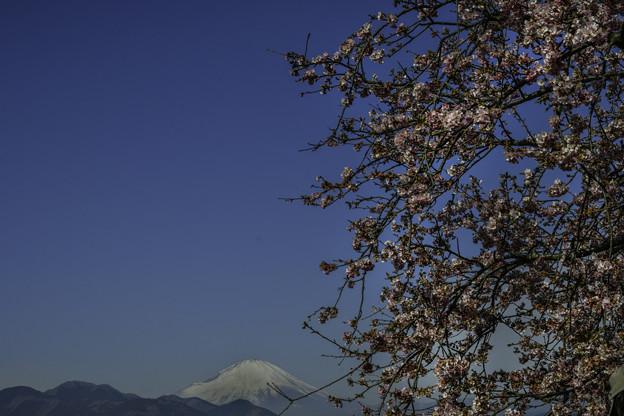 Photos: 富士を望む