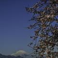 写真: 富士を望む