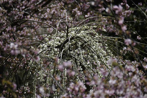 写真: 春景