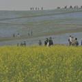 砂嵐の海浜公園