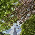 Photos: 春から初夏へ