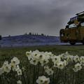 写真: ネモフィラの丘