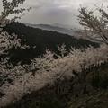 写真: 奥千本