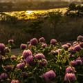 写真: 夕日に輝く