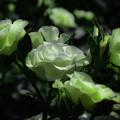 写真: 緑光