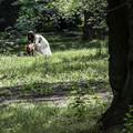 写真: 森の中に