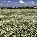 写真: お花畑