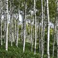 写真: 八千穂高原の思い出