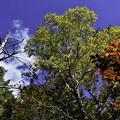 八千穂高原の思い出