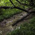 写真: 雨の御苑