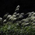 写真: 初秋「二の丸庭園」
