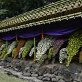 Photos: 懸崖作り花壇