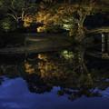 写真: 夜の六義園