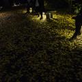 Photos: 夜の六義園