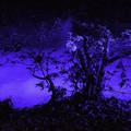 写真: 水香江「六義園」