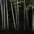 写真: 竹林「六義園」