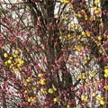 Photos: 早春の饗宴