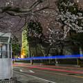 Photos: 山手の桜