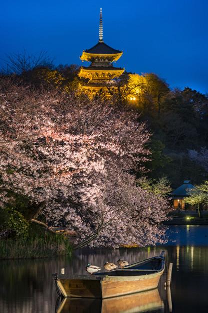 夜桜「三渓園」