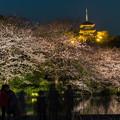 Photos: 夜桜「三渓園」