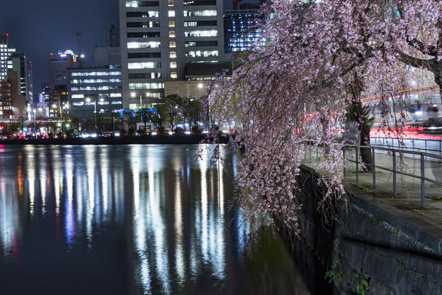 夜桜「皇居大手門」