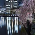 Photos: 夜桜「皇居大手門」