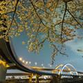 Photos: 五色桜大橋