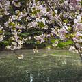 Photos: 晩春