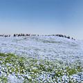 Photos: パノラマ「みはらしの丘」