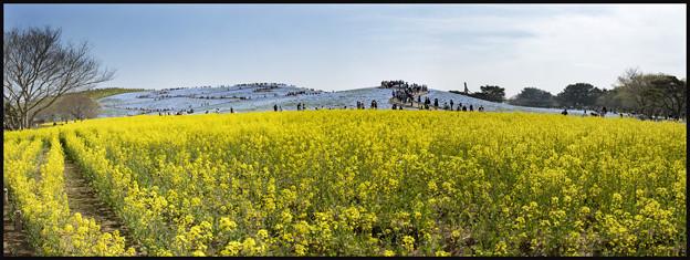 Photos: パノラマ「みはらしの丘2」
