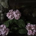 Photos: 手水舎の紫陽花