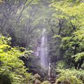 Photos: 林間に響く