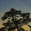 Photos: 夏の宵