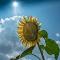 Photos: 太陽の子