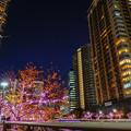 Photos: 冬のさくら
