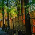 紅葉「平林寺」