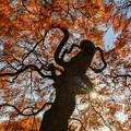 Photos: 紅葉「手向山」