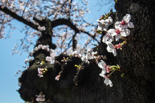 Photos: ひこばえ