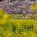 河川敷の春
