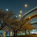 Photos: 桜咲く江北JCT