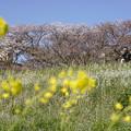 いつもの散歩道「多摩川土手」