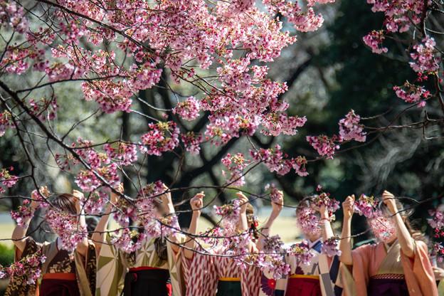 Photos: 春の日